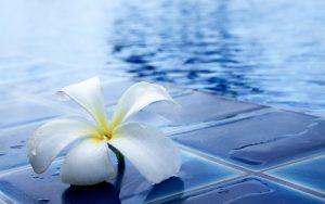 tendencias piscinas exterior