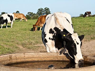 tratamiento de aguas para ganaderia